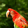 Polly want a cracker? A saucy rainbow-hued parrot glances over his shoulder. Hush, boy.