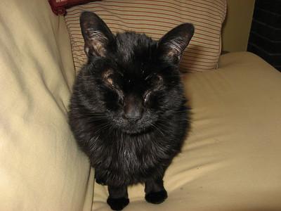 Tramp (aka batcat!)