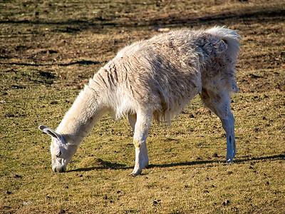 Dirty Llama