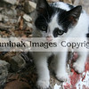 Cute kitten in Pays Basque
