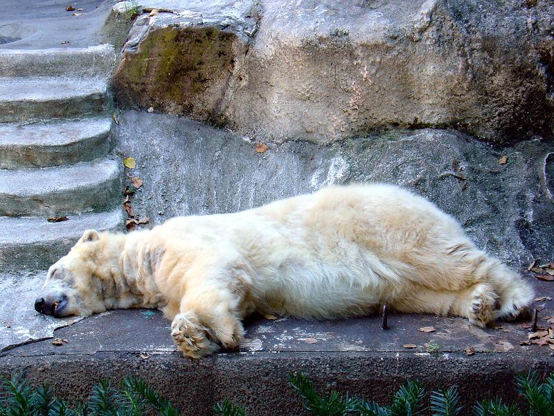 August 2004 - Bronz Zoo