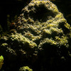 Underwater vista of sponge and coral.