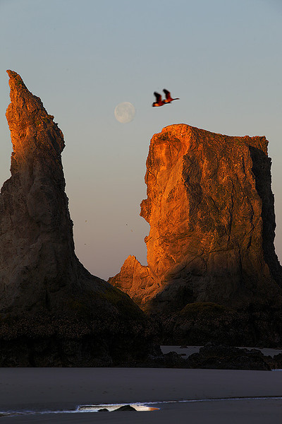 Vol en tandem.<br /> <br /> This one was taken at sunrise with the moon about to set into the Pacific Ocean.  These two geese were circling around providing me with this rare opportunity to combine all these elements into one shot.