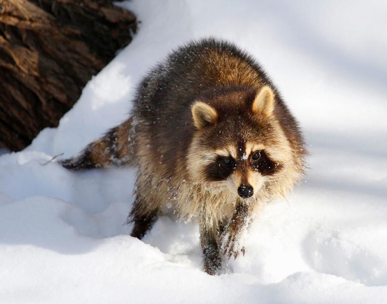 Winter Wanderer 2