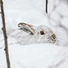 Winter Camouflage   1