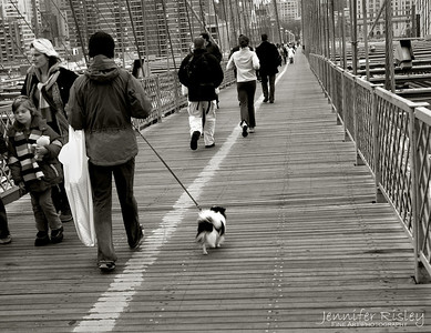 Walking Dog over Brooklyn Bridge