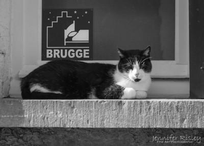Brugge Cat