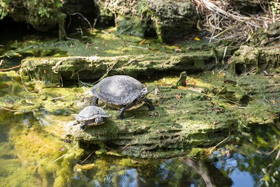 """Advice from a turtle:  Come out of your shell, Be well-rounded, Slow down, Know when to stick your neck out, Log times with friends, Home is where your heart is, Snap out of it."" - Llan Shamir"