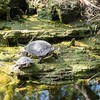 """""""Advice from a turtle:  Come out of your shell, Be well-rounded, Slow down, Know when to stick your neck out, Log times with friends, Home is where your heart is, Snap out of it."""" - Llan Shamir"""