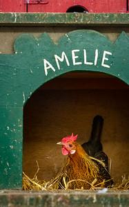 Das Huhn namens... / The chicken named...
