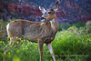 Out for Dinner. May 2010 - Zion National Park.
