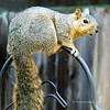 """I caught this guy trying to steal some more bird seed so I had to """"shoot"""" him!"""