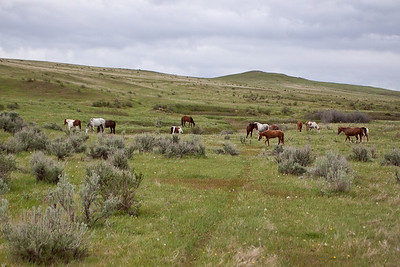 Wild Horses at Little Bighorn