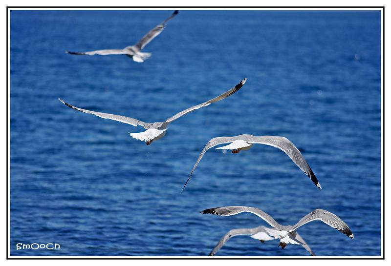 Freedom =)