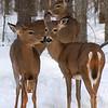 """""""Deer Kisses"""""""
