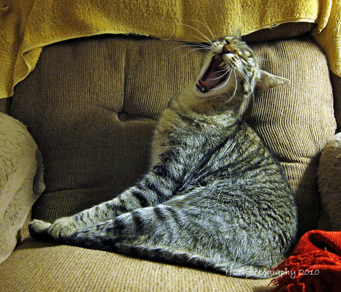 "Brian's cat, Bullet, showing his ""fangs!"""