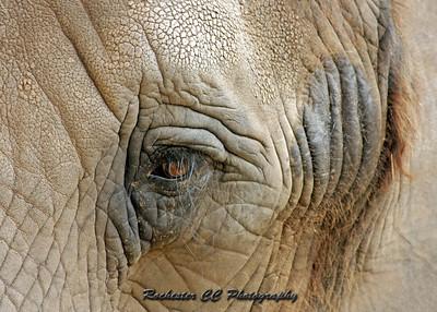 Close-up of an elephants eye at Seneca Park Zoo in Rochester, NY.