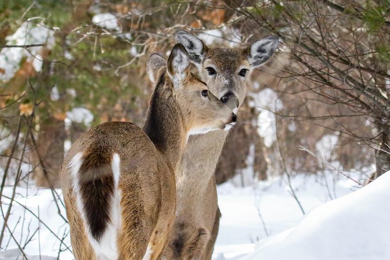 Walking the Deer Trail 2