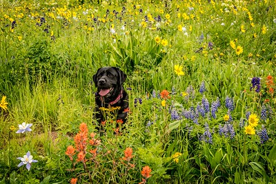 Our Girl Amongst the Mountain Wildflowers