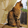 11.26.10<br /> <br /> Our cat Bullet, Bully for short! He loves peering out of this window!