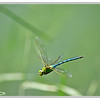 Libellula - I spent like 1 hour following it and hoping he would stop somewhere... but he didn't!!!