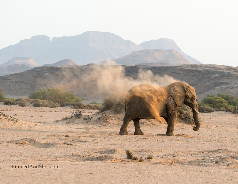 <strong><center><b>Sandbathing Desert Elephant<br>There is only one other group of desert-dwelling elephants in the world. They live in Mali, North Africa