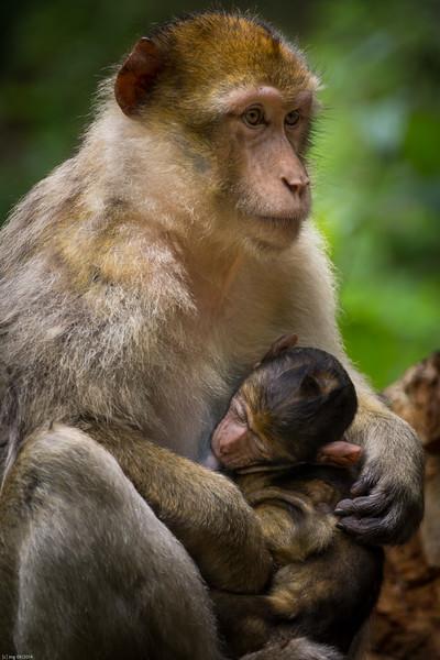 Mutter / Mother
