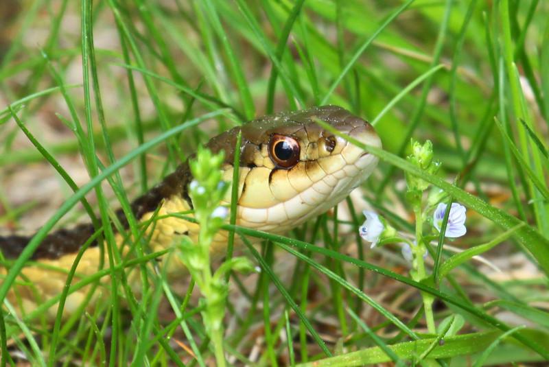Snake Eyes 2
