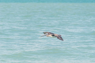 This month is soaring by, just like this pelican. I can't believe how fast it went.