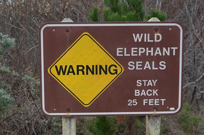Ano Nuevo Elephant Seals