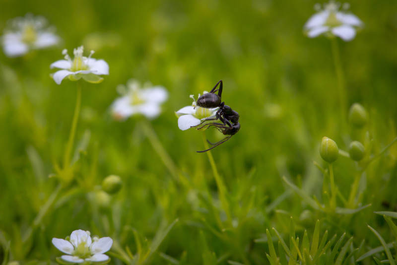 Ant-size flowers