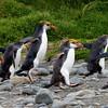 Antarctica Trip 2014