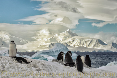 Chinstrap Penguins with a fantastic Antarctic view.