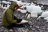 Artist, Paulet Island, Antarctica