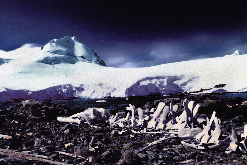 Antarctica 02