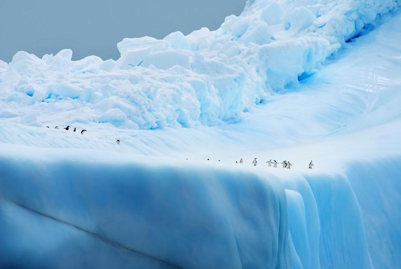 Penguins on Ice