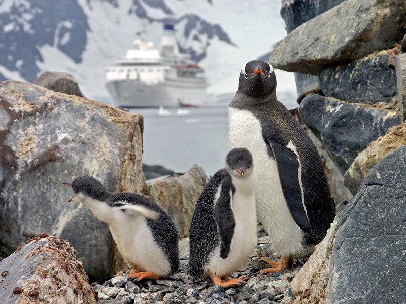 MV Discovery (Voyages of Discovery) at Paradise Bay, Antarctica. With Gentoo Penguin Chicks in foreground. Photo by Christian Wilkinson.