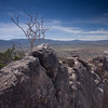 On the Mountaintop above The Slot in Anza-Borrego State Park, this tree occupied the highest outlook.