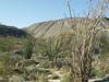 Wildflowers<br /> Anza Borrego Desert State Park