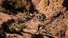 Apache Trail 20 (Desert bighorn sheep herd)-4