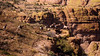Apache Trail 20 (Desert bighorn sheep herd)-3