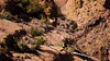 Apache Trail 20 (Desert bighorn sheep herd)-6