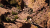 Apache Trail 20 (Desert bighorn sheep herd)-5