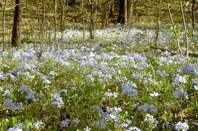 Blue Flox field