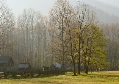 Backlit trees - Oconoluftee visitor center