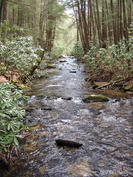 Creek in GA