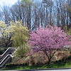 Spring at Fontana Dam Visitor Center