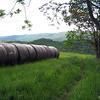 Fields Before Keffer Oak