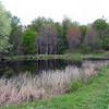 Spring-fed Pond on Chestnut Knob
