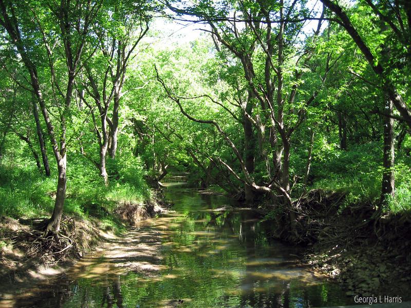 Tinker Creek (ala Annie Dillard)